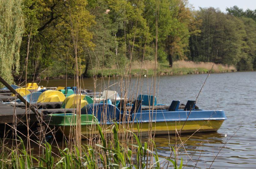 Schwäne neben einer Parkbank am Appelbecker See
