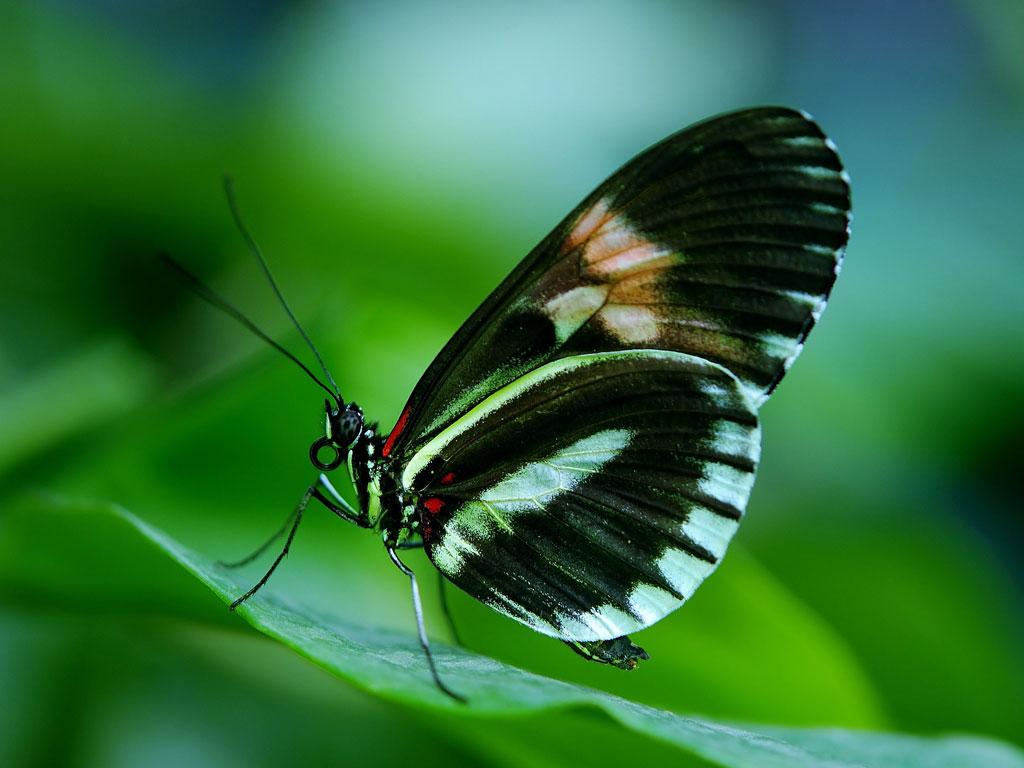 Nahaufnahme von einem Schmetterling auf einem grünen Blatt