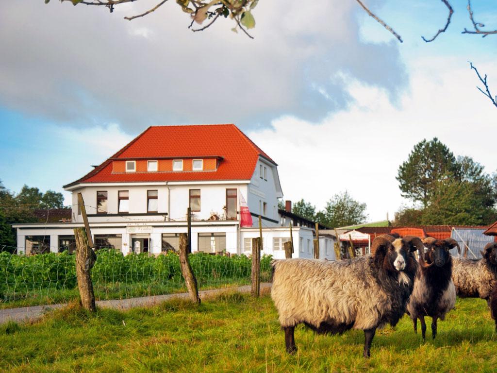 Großes weißes Haus mit rotem Dach in ruhiger Lage und Heidschnucken davor auf einer Wiese
