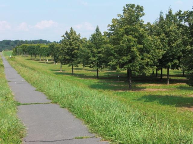 Einladende Wander- und Radweg bei Sottorf durch grüne Wiesen und Bäume
