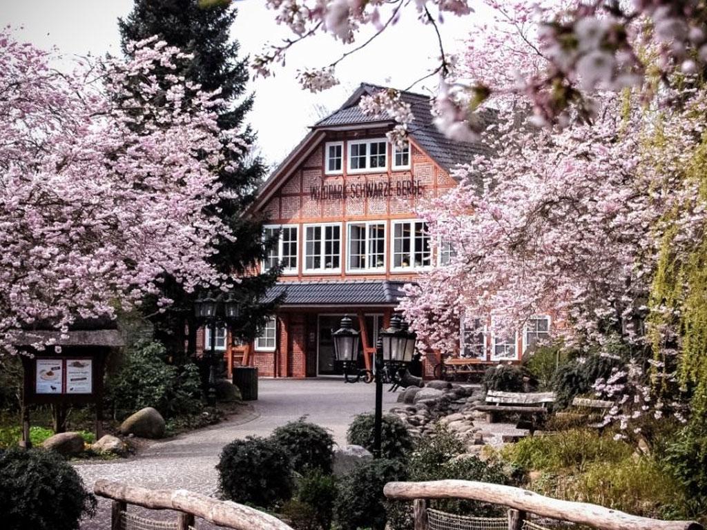 Der Haupteingang zwischen rosa blühenden Bäumen und vielen grünen Büschen