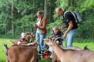 Eine Frau, ein Mann und ein Kind im Rollstuhl füttern Ziegen auf einer grünen Wiese im Wald