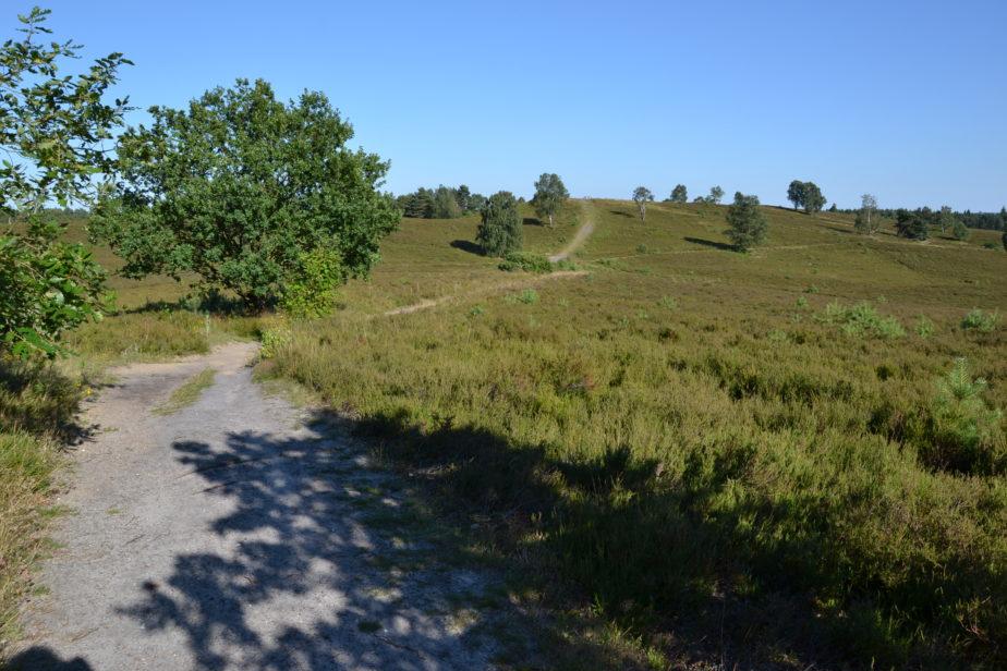 Weitläufiger Blick über die Heidefläche mit Weg über den Brunsberg