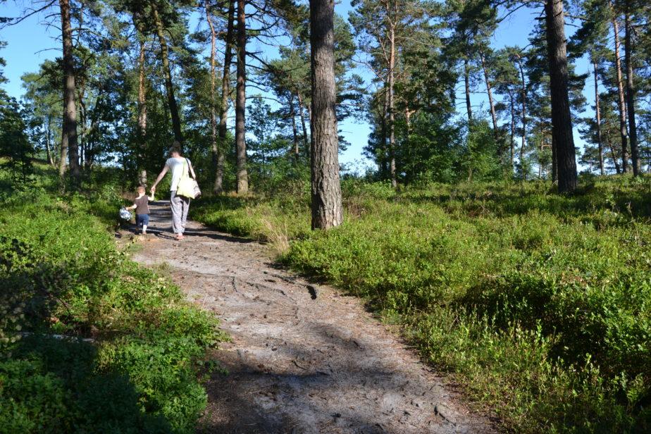 Junge Frau geht mit Kind an der Hand auf einem Sandweg durch den Wald