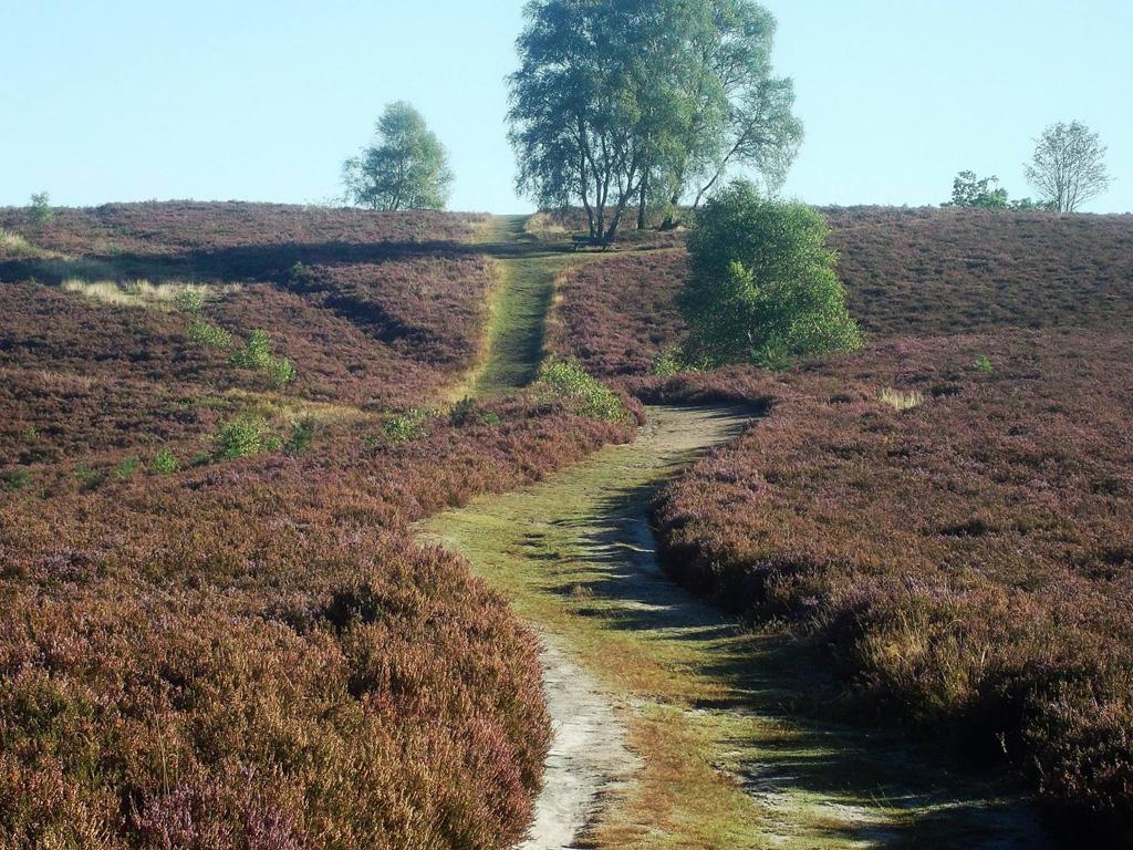 Blick über die Heidefläche mit einem Weg hoch auf den Brunsberg