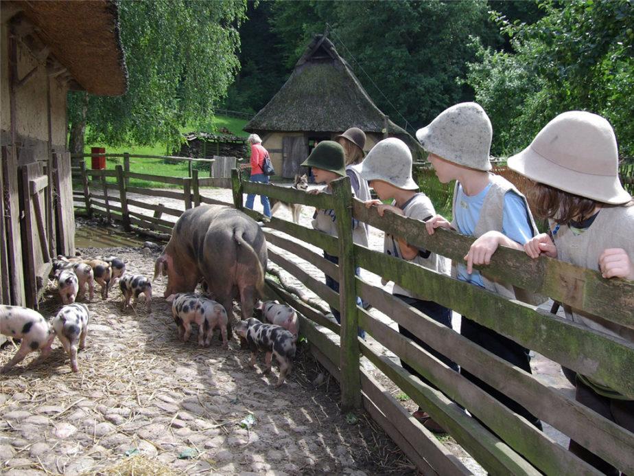 Ein paar Kinder mit Filzhüten bestaunen die bunten Bentheimer Schweine - Eine große Sau mit kleinen Färkeln