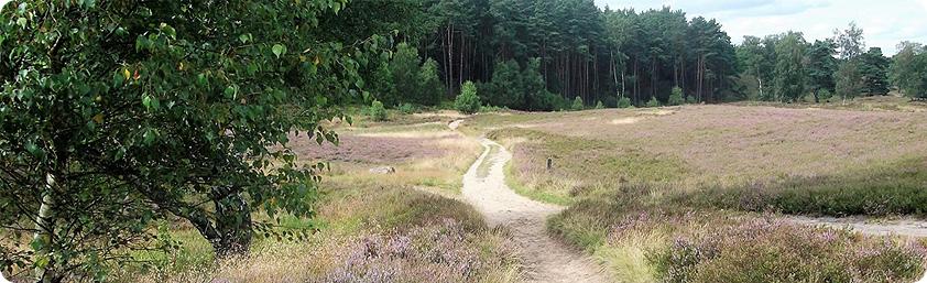 Blick über die Heidefläche mit einem Weg