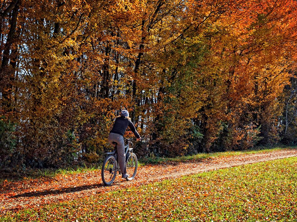 Mädchen fährt mit dem Fahrrad über einen mit bunten Blättern bedeckten Weg